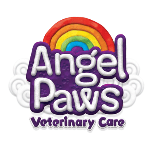 Angel Paws Veterinary Care - Pet euthanasia & cremation Gold coast