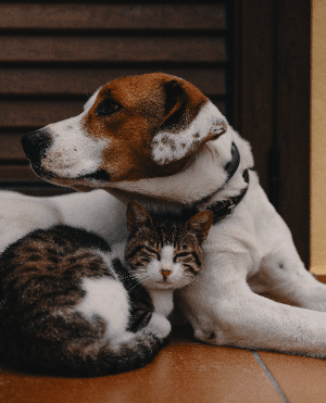 brown and white dog and cat cuddling - pet bond