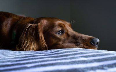 Do Pets Grieve When Losing A Playmate?