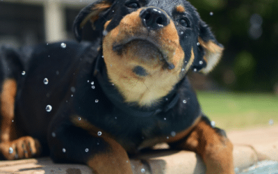 How To Help Your Pet Stay Cool