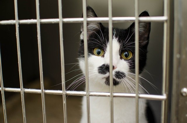 cat in cage at vet after chocolate poisoning