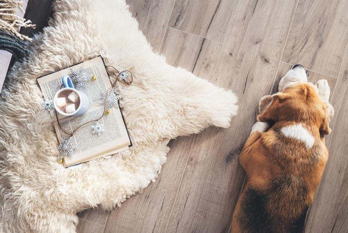 Beagle Lying on the Floor — Pet Haven Animal Crematorium in Burleigh Heads, QLD