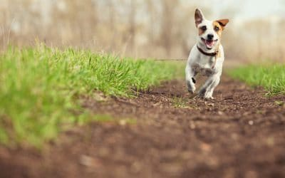 Questions To Ask When Getting A Pet Cremated